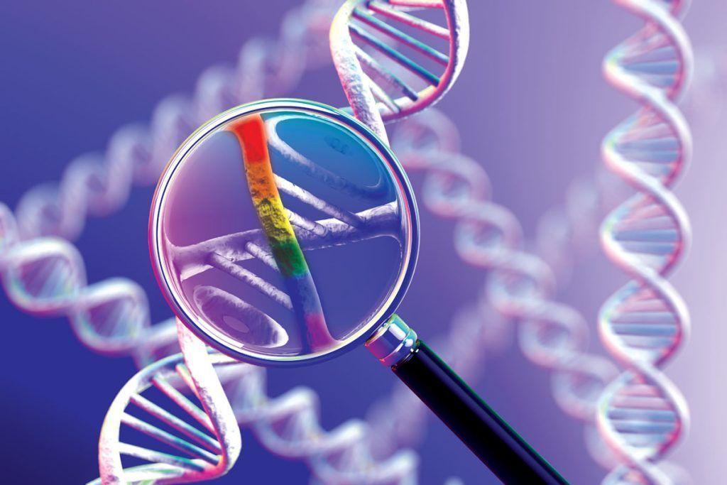Único gene gay não existe, de acordo com análise de DNA
